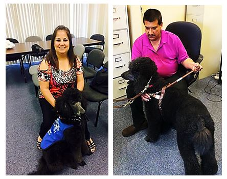 split pictures of Pete and Priscilla with a guide dog